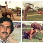 Don Berna revela que Pablo Escobar era vegano