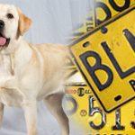 Desde octubre, pico y placa para perros en Bogotá