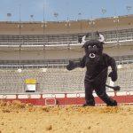 Animalistas se ofrecen para reemplazar toros en corridas