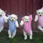 Fallo también prohíbe adopción de mascotas a parejas gay
