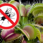 Artista bogotana convierte plantas carnívoras en vegetarianas