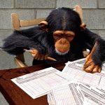 Policía captura banda que ponía a chimpancés a firmar planillas para candidatos