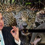 "Fiscal investigará Jaguar de documental ""Colombia magia salvaje"""