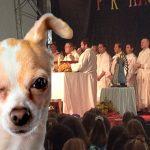 """Corte prohíbe expresión """"perros en misa"""""""