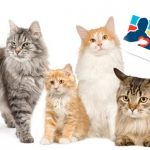 Confirman presencia de al menos 4 gatos en marcha uribista del 2 de abril