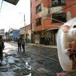 Nadie quiere adoptar a las ratas del Bronx, ¿discriminación?