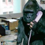 Cancelan oficinas Pet Friendly en Medellín luego de que empleado llevó un mico
